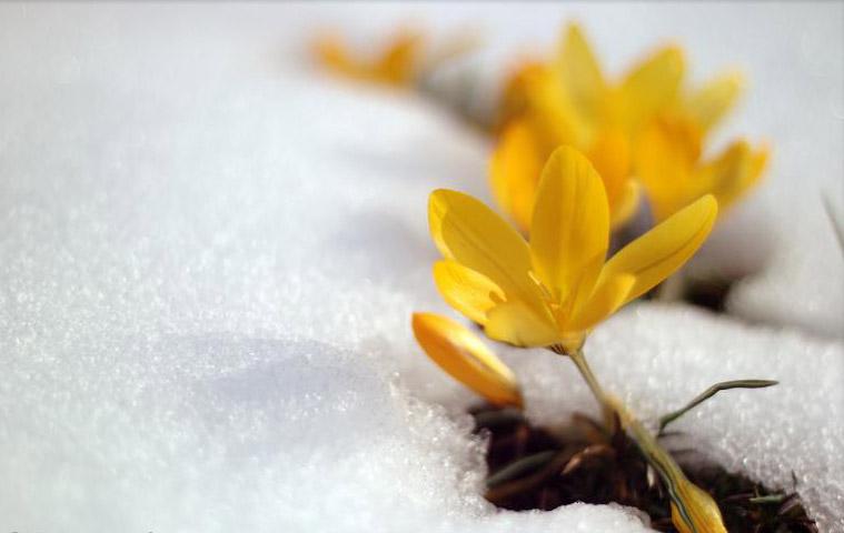 Image result for زمستان